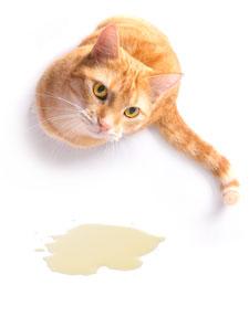 Als je kat in huis plast